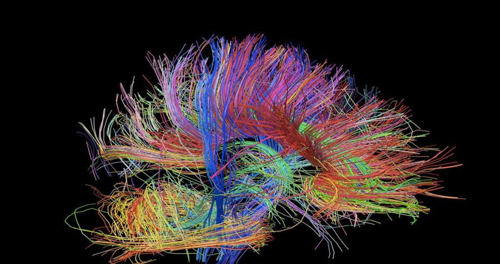модели работы мозга